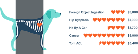 Dog Medical Costs